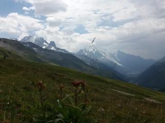 depuis le col de la Balme, Verte, Drus, Mont Blanc